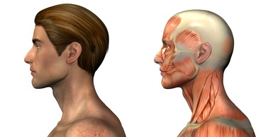 anatomical overlays - male - head and shoulders -